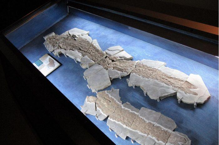 Древен фосил от риба разкрива еволюционния произход на човешката ръка