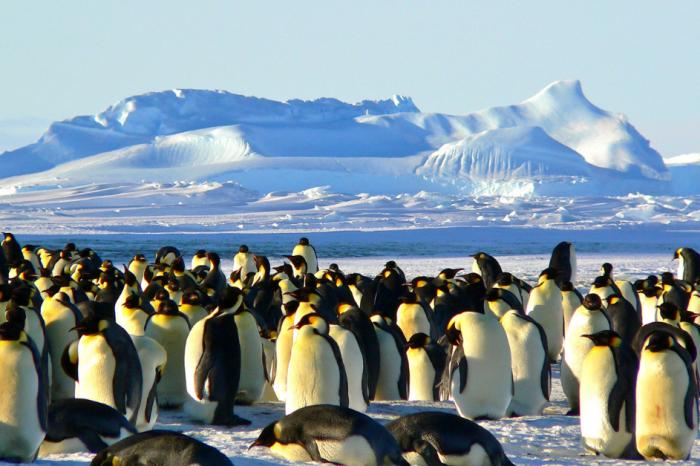 Преброяване на пингвините