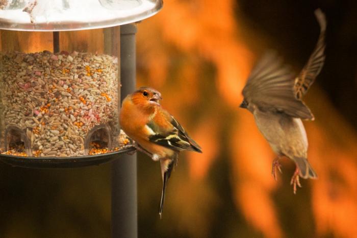 Борбата за птиците