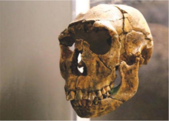 Дали климатичните промени са довели до изчезването на ранните човешки видове?