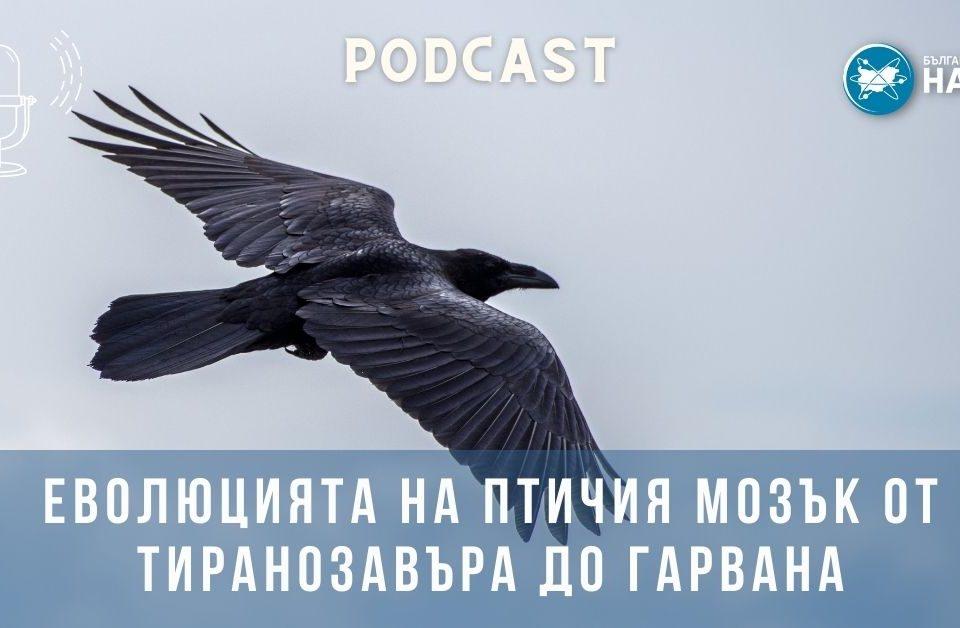 [АУДИО] Еволюцията на птичия мозък от тиранозавъра до гарвана