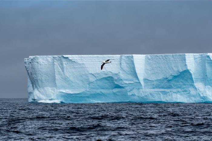 Учен вербува албатроси, за да открива нелегални риболовни кораби в Антарктика