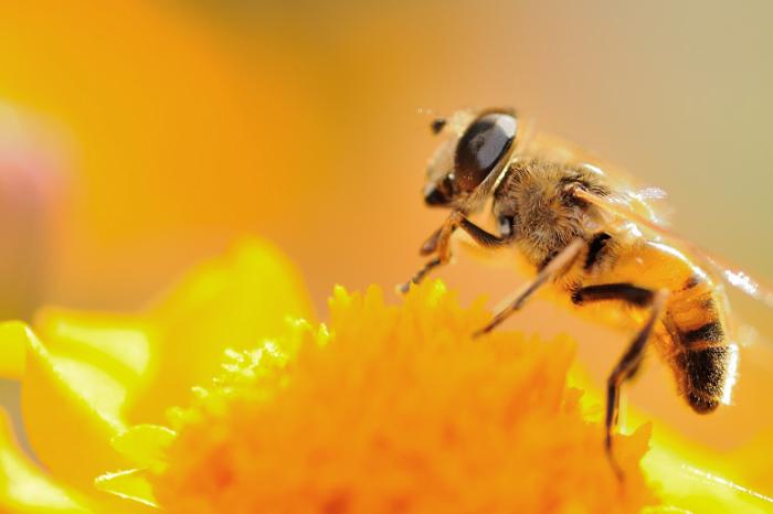 Какво е чувството да си пчела? Стремежът да се разбере чувствителността на животните