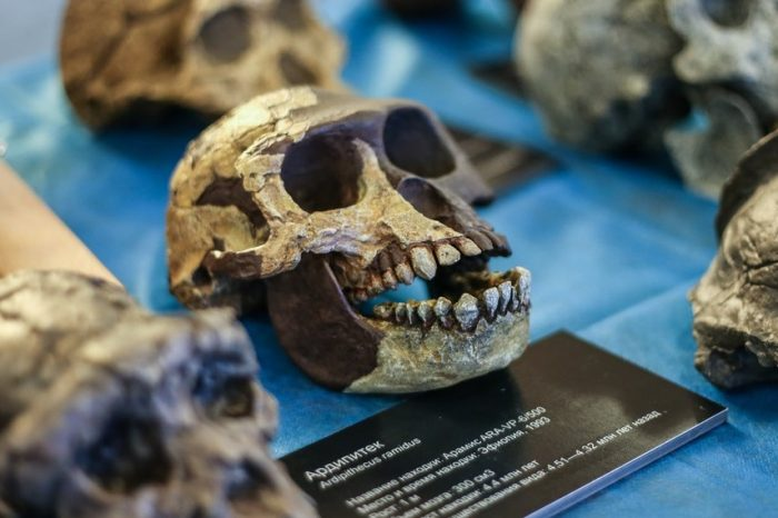 Най-ранните ни човешки предци може да са висели по клоните подобно на шимпанзетата