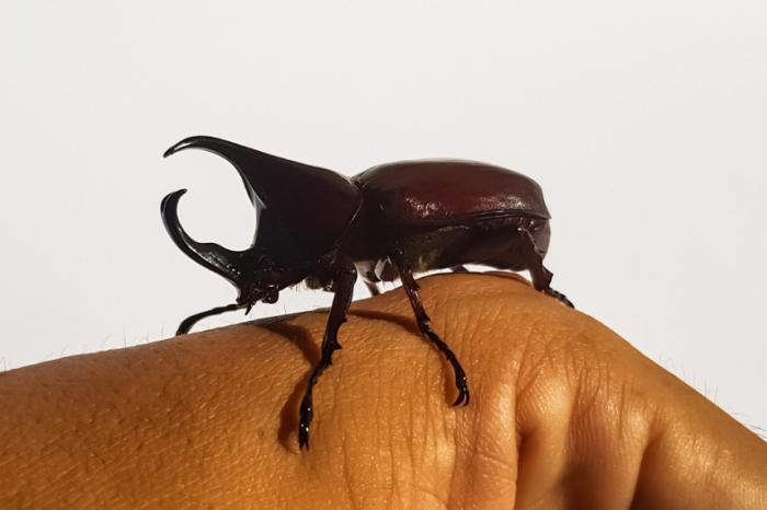 Хората са започнали да се вълнуват повече за съдбата на насекомите