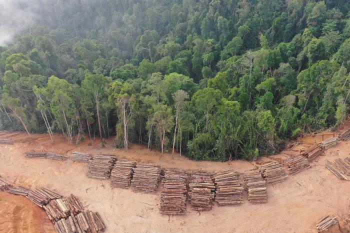Рискуваме над 10 000 вида в Амазония да изчезнат, съобщава научен отчет