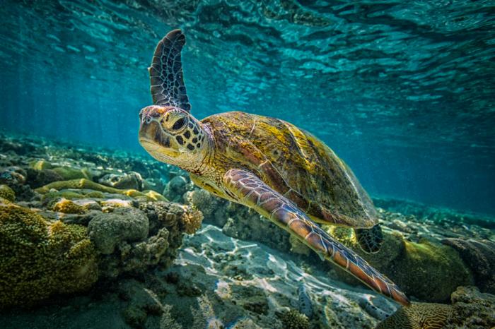 Защо Големият бариерен риф е в опасност?