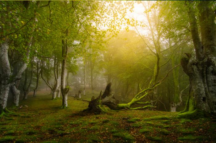 Незасегнатата природа е била почти толкова рядка преди 12 000 години, колкото е и сега