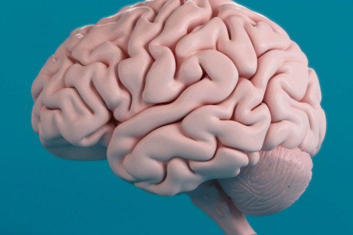 Как хората са развили по-големи мозъци от маймуните