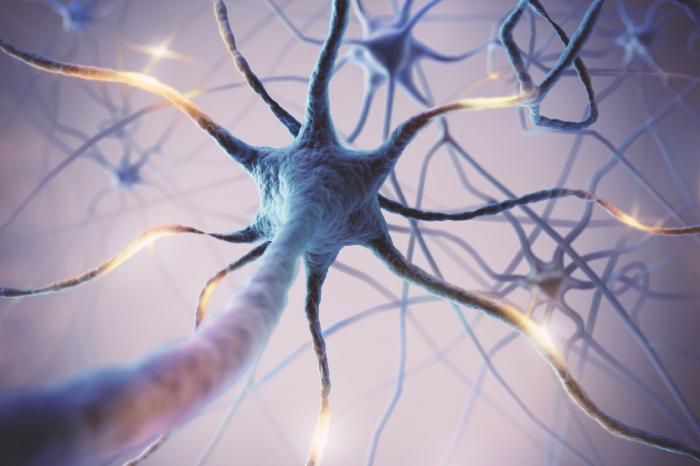 Екип открива мозъчен механизъм, който автоматично свързва обекти в съзнанието ни