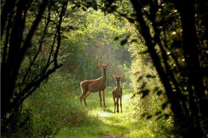 Под 3% от сухоземните местообитания са запазили девствената си природа