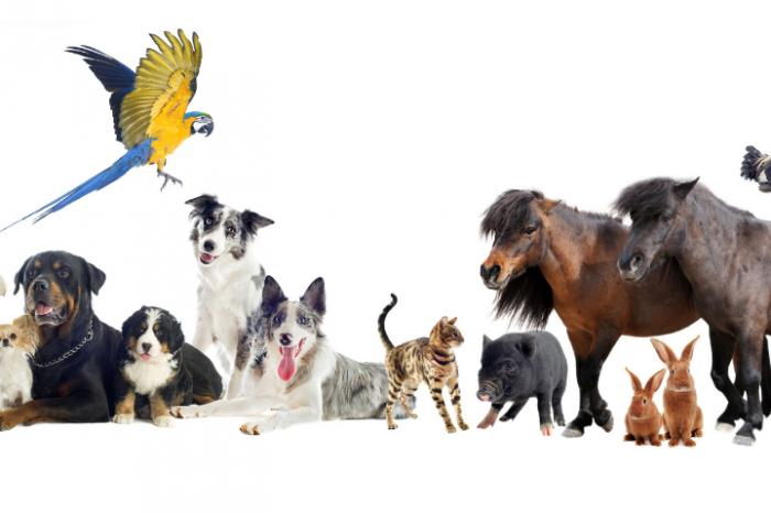 Как работи мозъкът на умните животни?