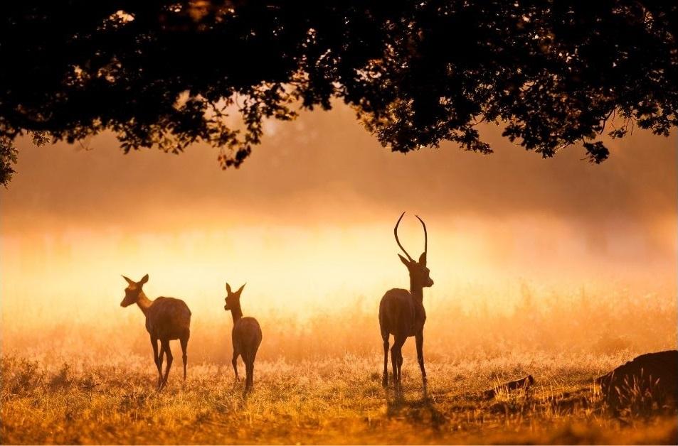 5 оптимистични истории за дивата природа