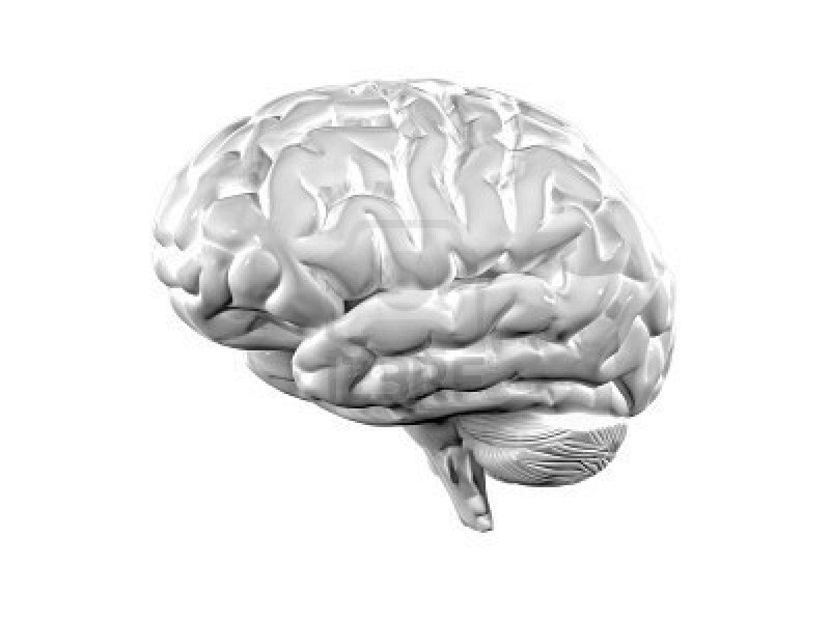 Възстановяване на мозъчната мрежа