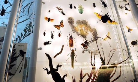 Колко вида живи организми съществуват на Земята?