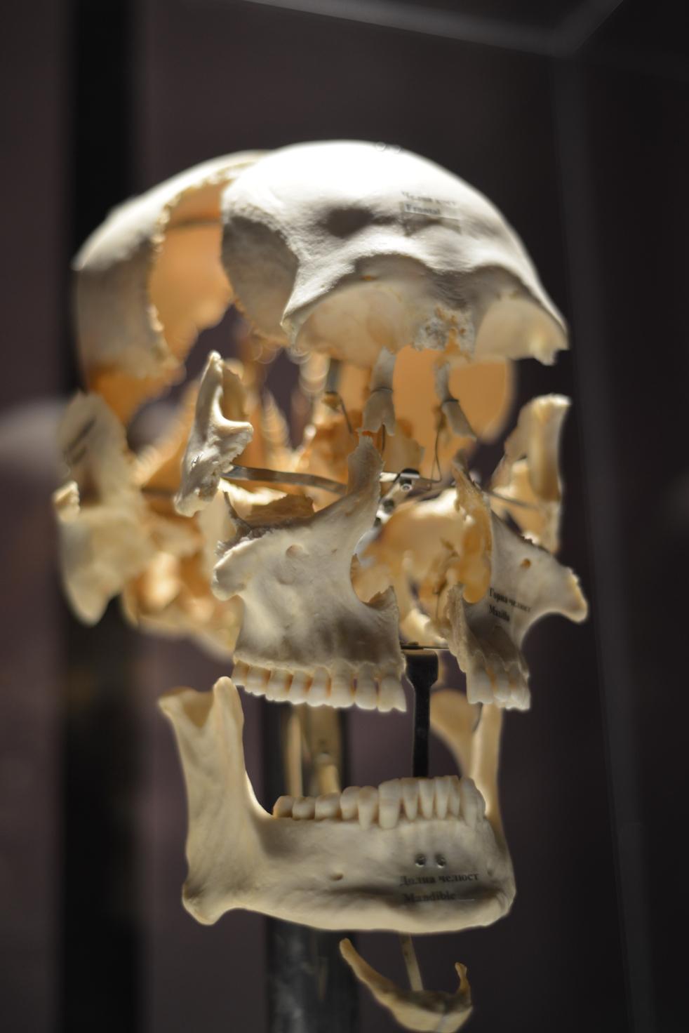 Започва изложбата, която разкрива тайните на човешкото тяло