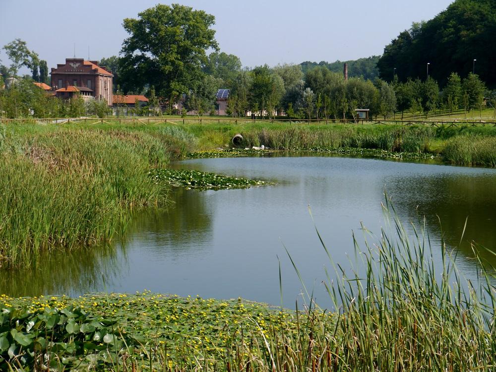 Изкуствени влажни зони за борба с климатичните изменения