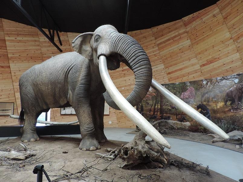 Mastodont_Anancus_arvernensis_-_Park_Pliocene_epoch,_Dorkovo_01.JPG (804×603)