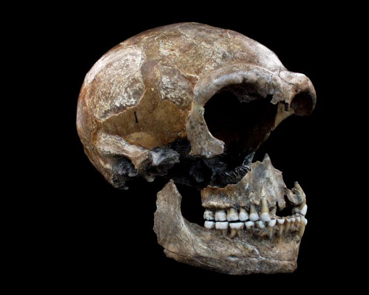 Диетата на неандерталците: 80% месо, 20% зеленчуци