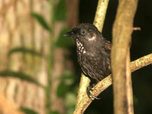 Нов вид птица в Китай