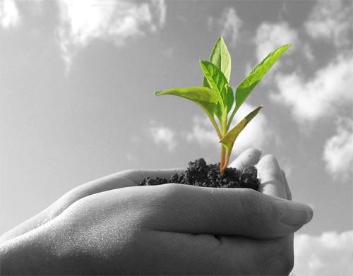 Същност и значение на Растителната Защита в съвременните условия на развитие на Европейския съюз и  България