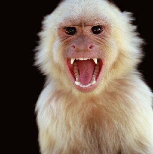 Експериментално лечение защитава маймуни от въздействието на смъртоносния вирус Ебола