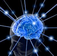 Учени разкриха защо човешкият мозък се различава от този на приматите – открита е частицата протеин, която прави човека най-интелигентнотÐ