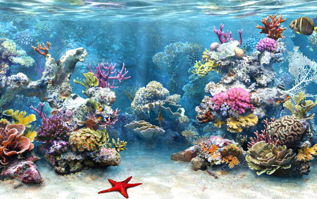 Кораловите рифове може да изчезнат до края на XXI век