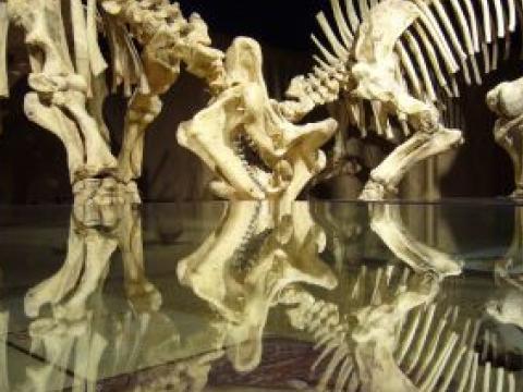 Изкуствен интелект помага по-точно да се локализират вкаменелости