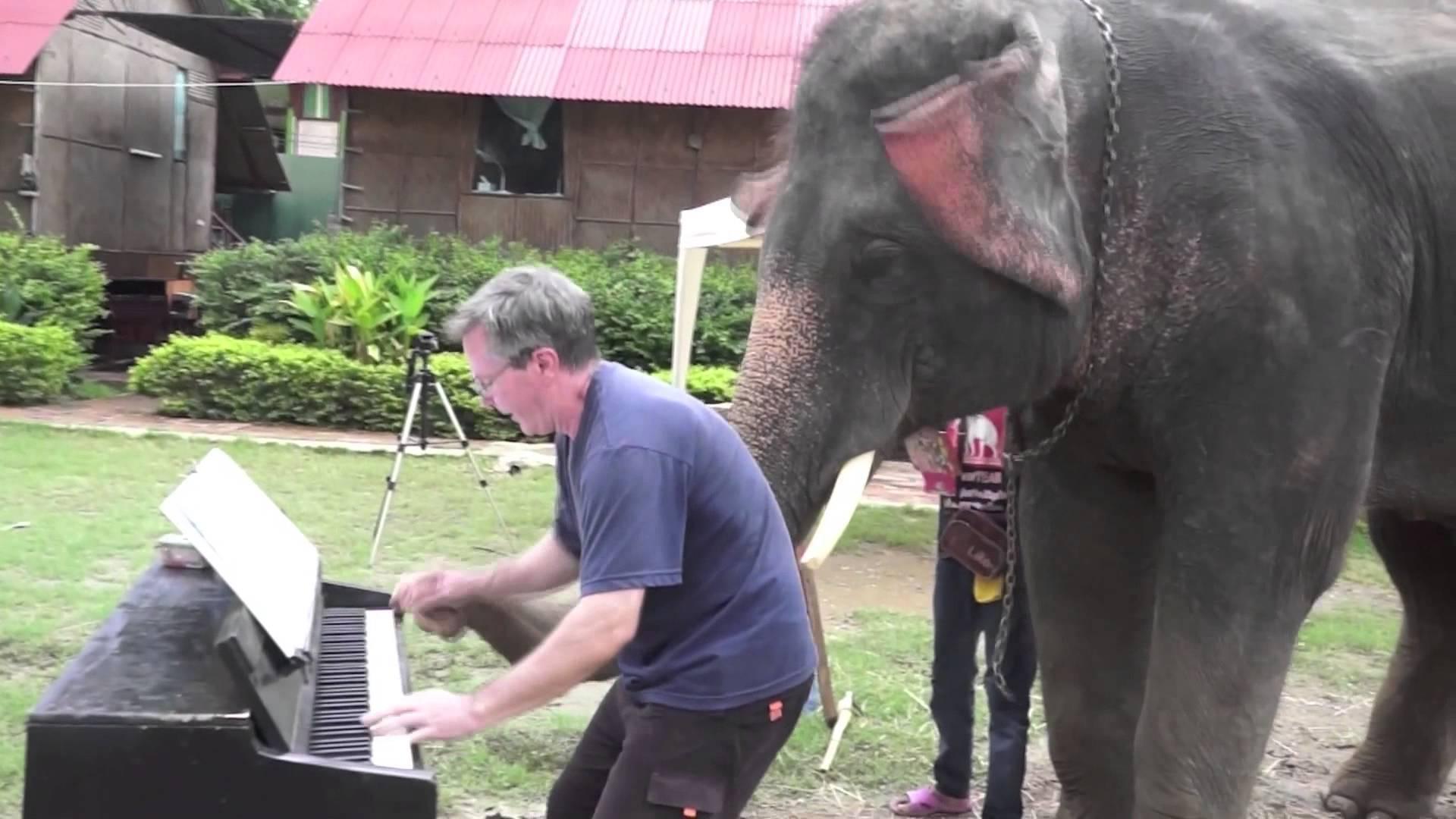 Дует с пиано - човек и слон.