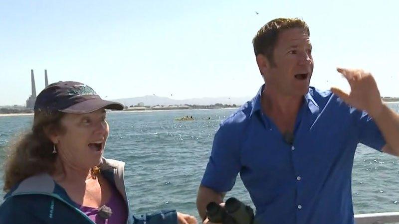 Интервю свързано със син кит се прекъсва заради истински син кит