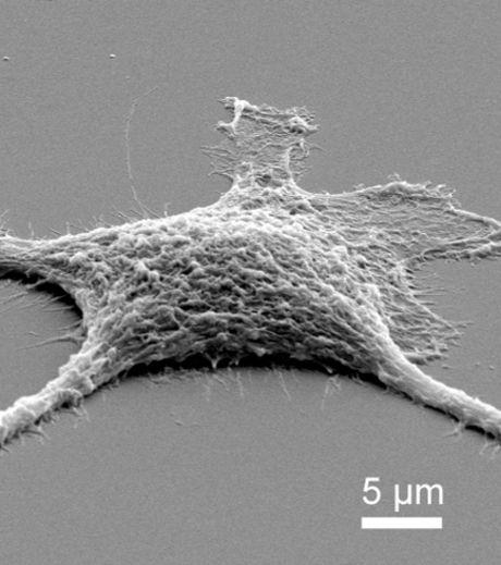 """Изследователи създадоха първите клетки -""""зомби"""""""