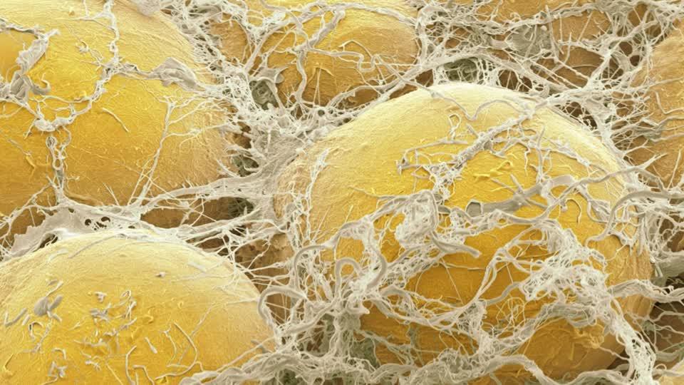 Заместител на бисфенол А може да предизвиква формиране на мастни клетки и има негативен ендокринен ефект