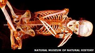 Учените поглеждат във вътрешността на перуанска мумия