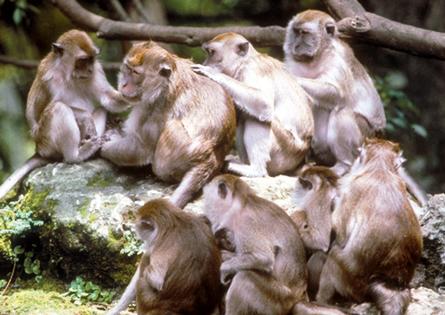 Двете стъпки до появата на социално поведение при приматите
