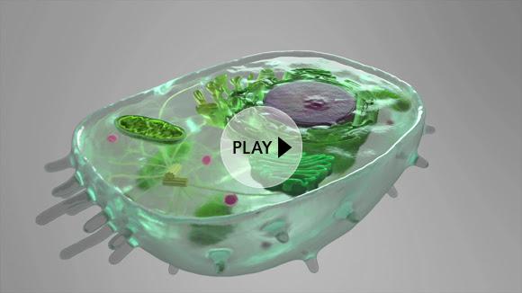 Видео показва отвътре човешка клетка