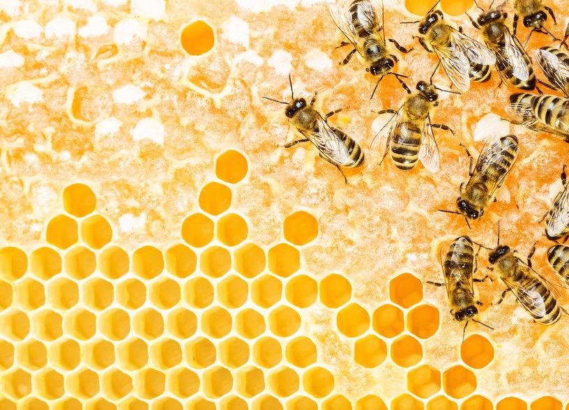 Земеделски производители експлоатирали пчелни продукти и преди 8 500 години