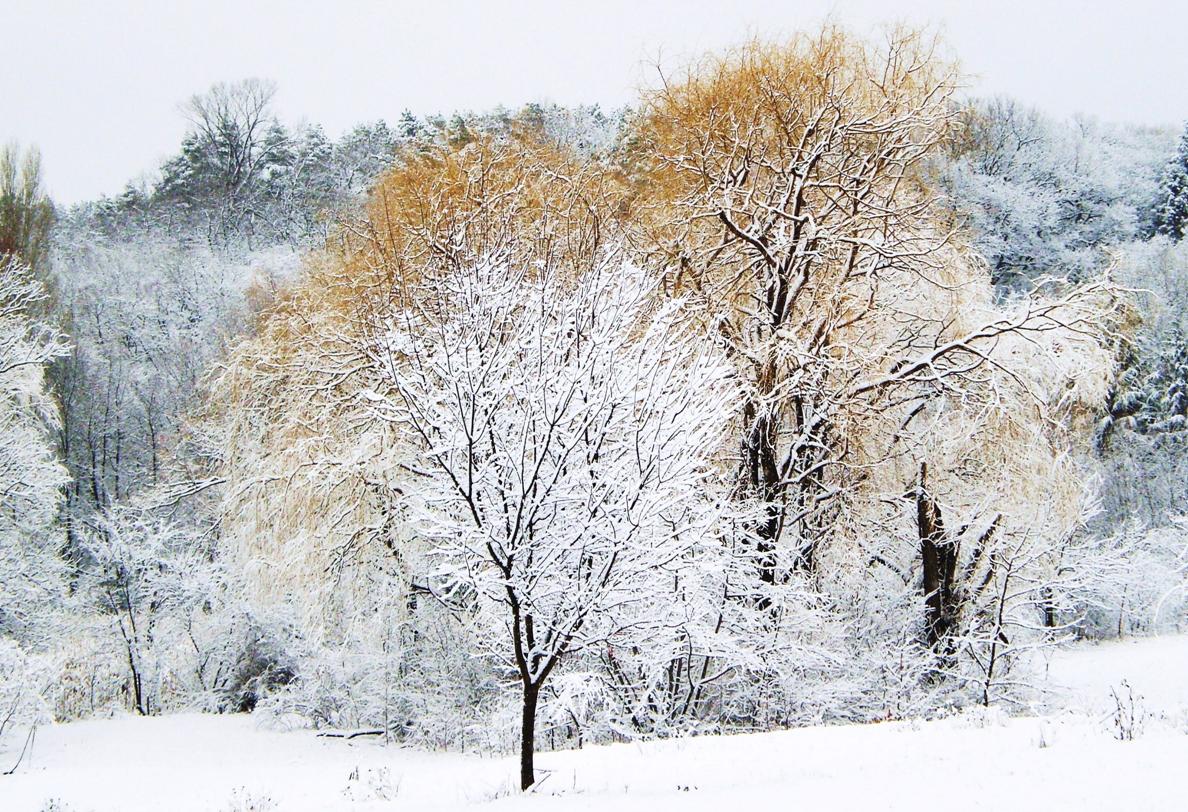 Зимата е хубава, когато има сняг